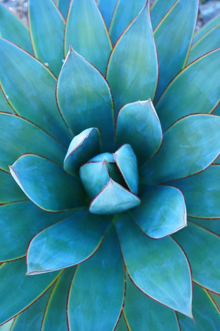 Flor aguamarina | Aquamarine flower - #flores azules #blue flowers