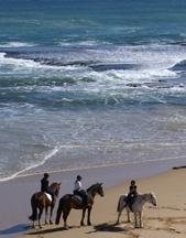 GUNNAMATTA HORSE TRAIL RIDES Ride beautiful horses along a pristine beach on the Mornington Peninsula, AWESOME!