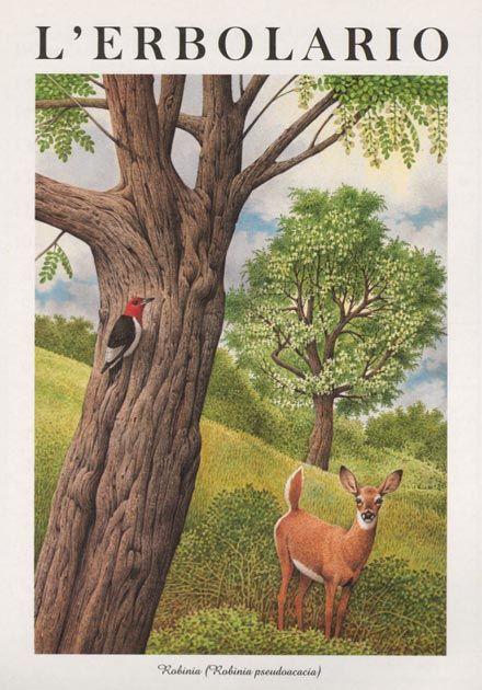 Calendario Boschi.1997 Nel 2019 Art Acquerello Animali Acquerello E