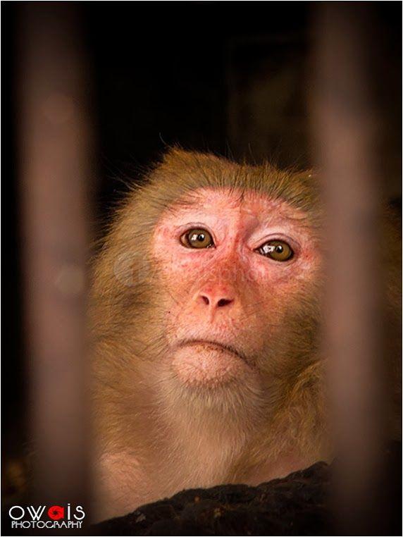 Best Photo of the Day in #Emphoka by Muhammad Owais Khan [Nikon Coolpix P80] - http://flic.kr/p/feweun