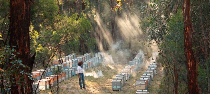 Currently Northern Light Candle Company is devoting much research into a new hive design based upon what bees prefer, and also to a feeding programme for bees with the intention of raising their immunity to pesticides.