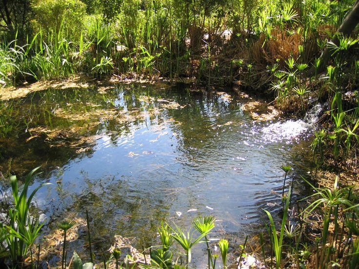 Les plantes aquatiques pour bassin d'ornement