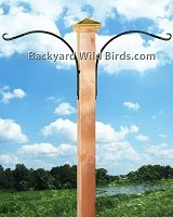 Post Bird Feeder Poles at Backyard Wild Birds
