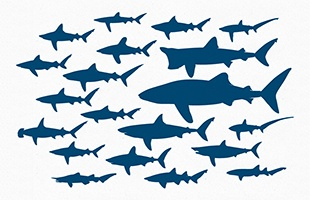 Free Vector File - 20 Shark Silhouettes