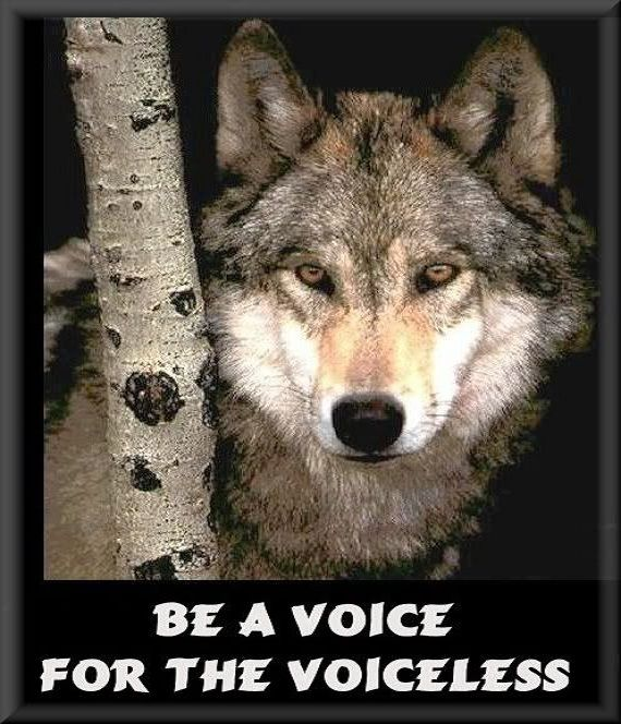 Image result for Pinterest Wolf Voice for the Voiceless image