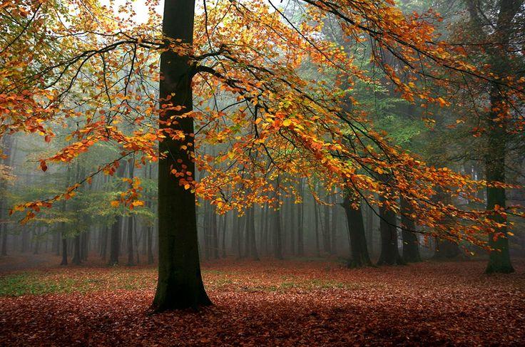 Туманный лес, автор - Roeselien Raimond