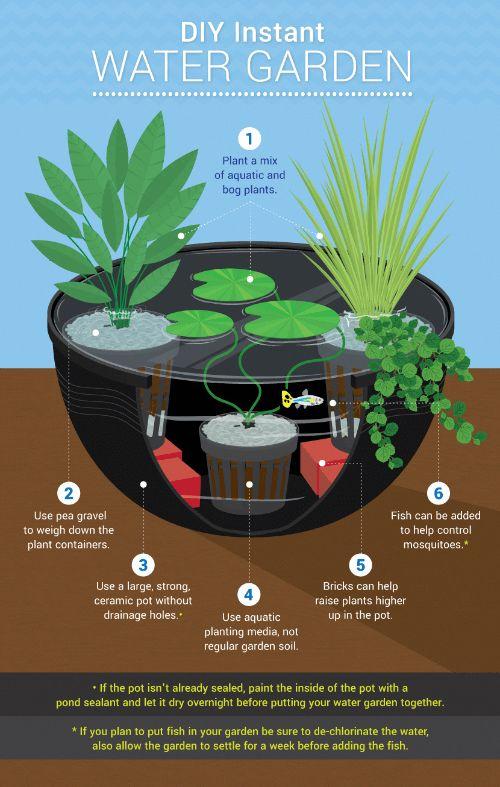 Organic Gardening For Dummies #OrganicGardeningBangalore ...