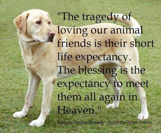 Animals-our friends they help us in many ways