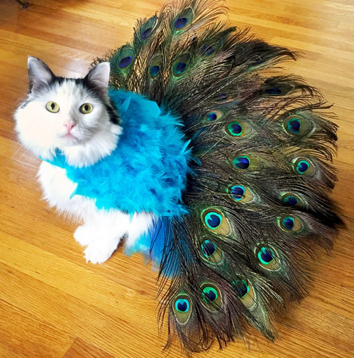 Kitty Couture - Pretty as a Peacock