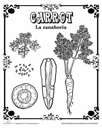 Worksheets: Carrot in Spanish