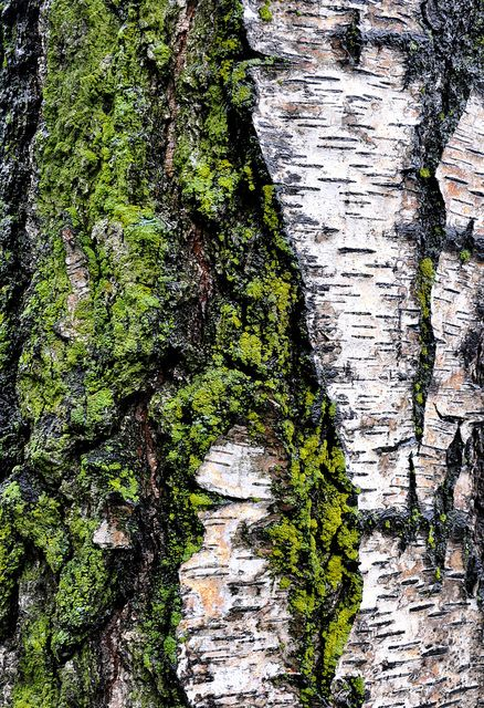 tree bark. Love the patterns-green, grey, white and black-love it!