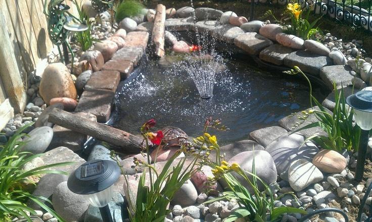 Backyard pond with red slider turtle   Water Gardens ...