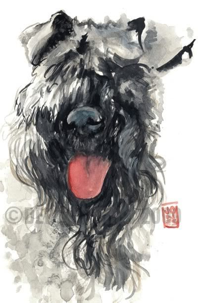 kerry blue terriers - Google Search