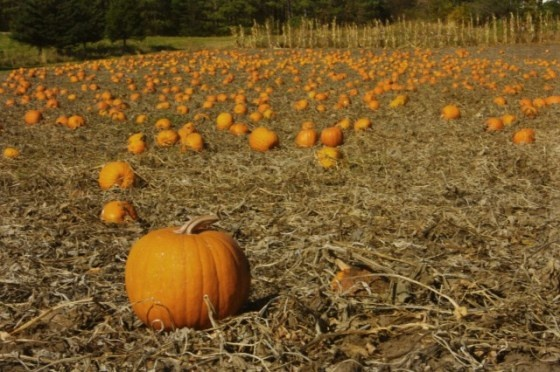 17 best images about halloween on pinterest pumpkins Better homes and gardens episode last night