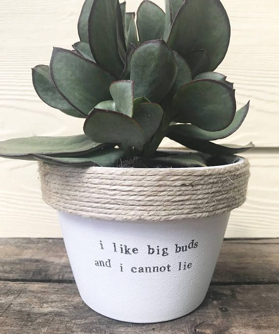I like big buds and I cannot lie | funny | pot plant with a pun 11cm pot – Jessica Mercer