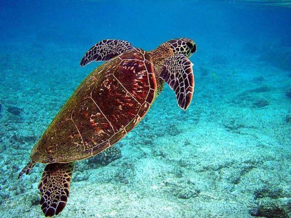 A sea turtle in Madagascar