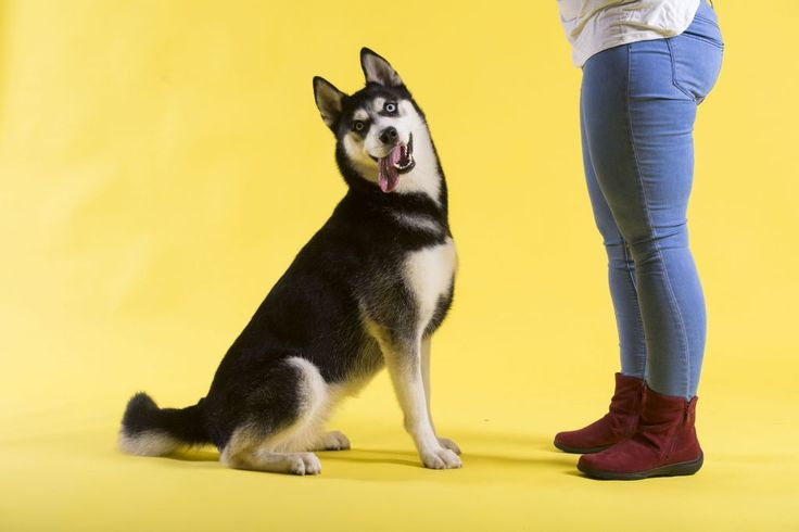 Our four-legged Hotter Walkies stars, and their two-legged Hotter companions, enjoyed a wag, a walk and a chat for our special photoshoot.  http://www.hotter.com/blog/lets-go-hotter-walkies/