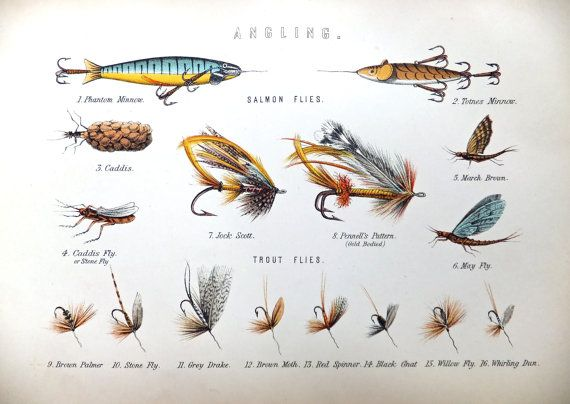 Fish Flies Antique Chromolithographs Angling 1880s Home Decor Office