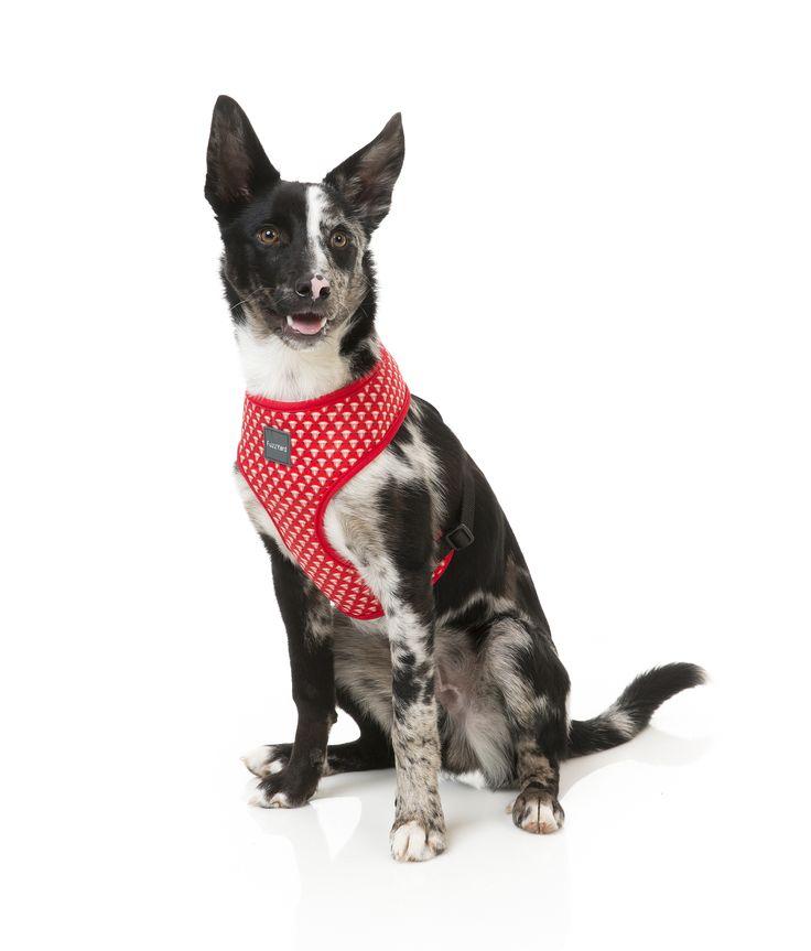 FuzzYard Under Pressure Dog Harness