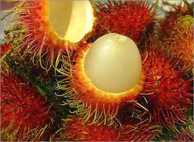 rambutan - The flesh exposed when the outer skin is peeled off is sweet and sour, slightly grape-like and gummy to the taste. It is related to the lychee and longan.