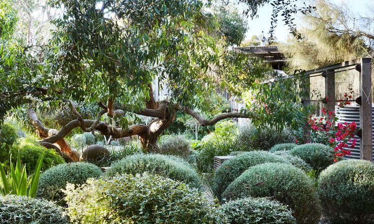 Take a trip to Peter Shaw's striking and sculptural coastal garden with us. Words by Georgina Reid. Images by Caitlin Mills.