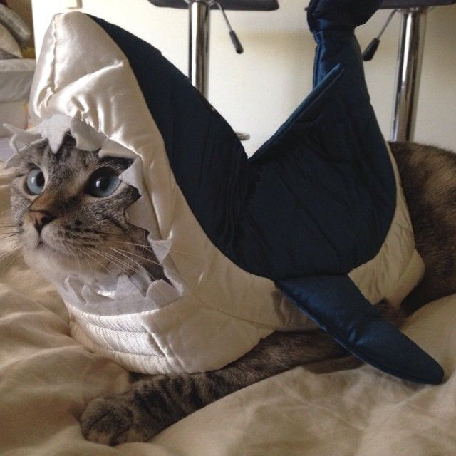 Find great deals on eBay for cat shark costume. Shop with confidence.