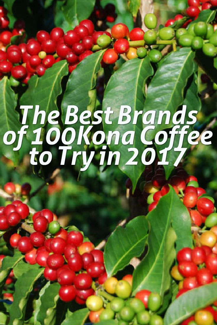 100% certified Kona coffee comes from the Kona district on the southwest coast of the Big Island of Hawaii. Known as the Kona Coffee Belt, this area is only two miles wide and 15 miles long and is the perfect growing environment for Kona trees to thrive. The combination of the bright sun, humidity, rain and its volcanic soil create the ideal atmosphere for Kona beans to ripen from green buds to mature beans that resemble ripe cherries.