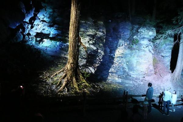 Foresta Lumina est maintenant fermé pour la saison 2016, mais l'activité sera de retour en 2017! Réservation à partir de mai 2017.   La forêt de la Gorge s'anime à la nuit tombée. Venez vivre une randonnée nocturne de 2 km truffée de surprises q...