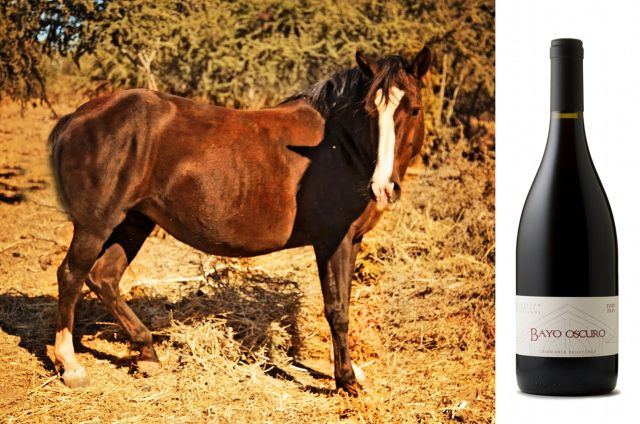 A bottle of our Bayo Oscuro Syrah and a Bayo Oscuro horse!