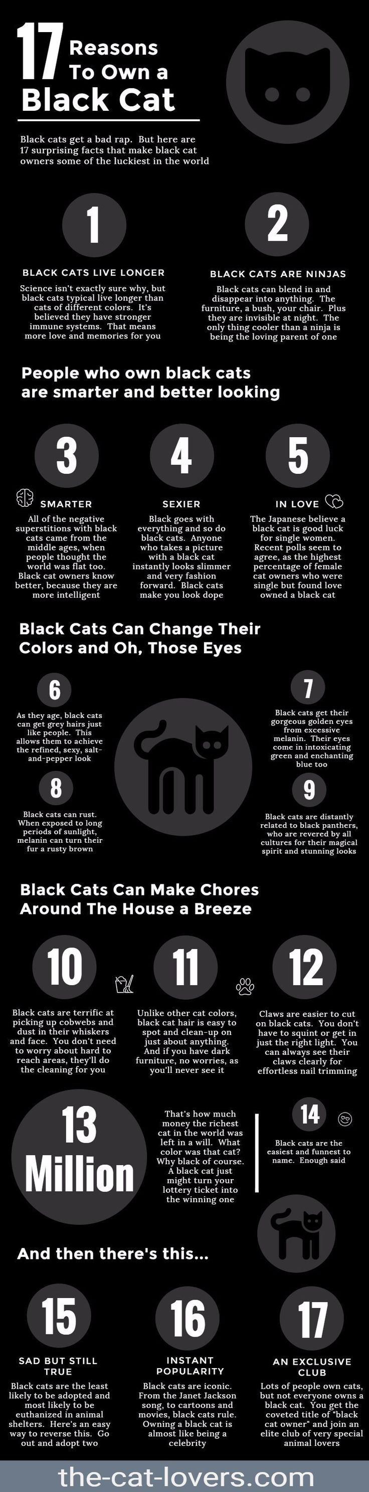 best meow images on pinterest kitty cats black cats and cat stuff