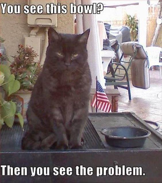 <h1>Funny cats – 38 pics</h1>