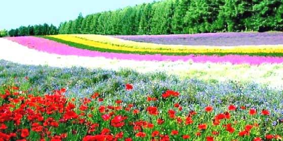 This is real!Beautiful Flower, Fields Of Flower, Taste Charts, Emeralds Cities, Nature, Gardens Design Ideas, Flower Gardens, Flower Farms, Flowers Garden