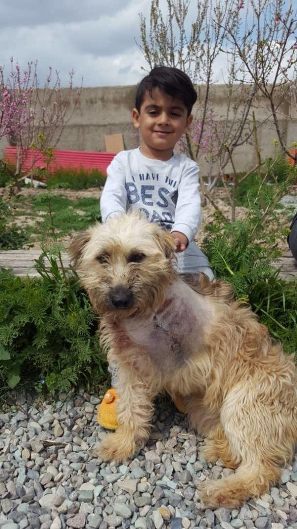 Dogs For Adoption Near Toronto On Petfinder Dog Adoption Dog