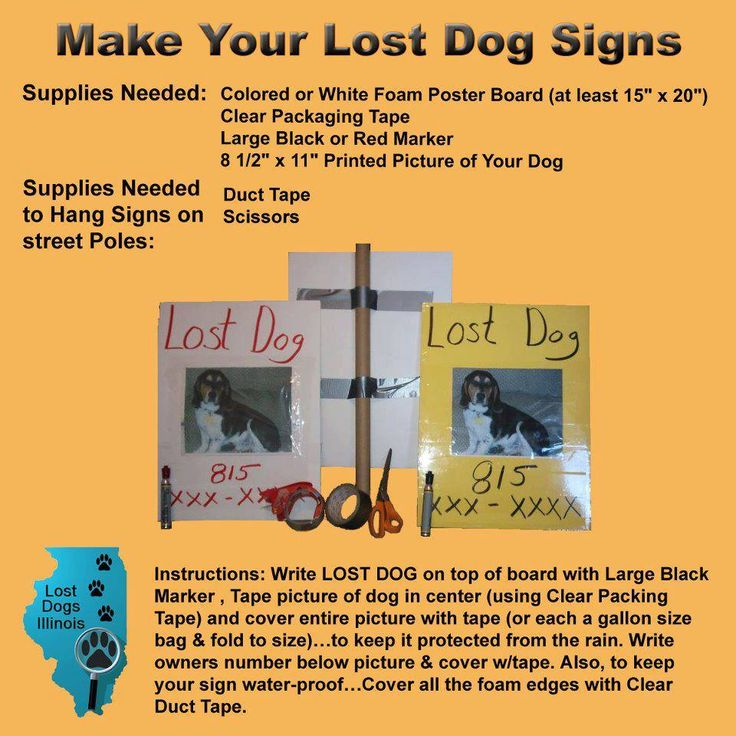 29 best Tips\/Hints to Help with Lost\/Found Dogs images on - make a missing poster