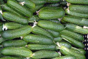 «Огуречный» секрет. Как выращивать овощи в открытом грунте   Огород   Д   Сад и огород   Постила