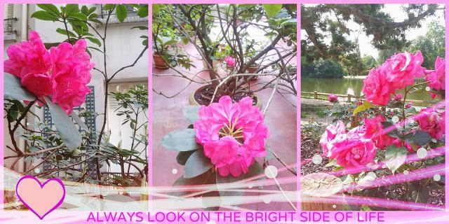 SPRING AN FLOWERS jak pisac poczytnego bloga