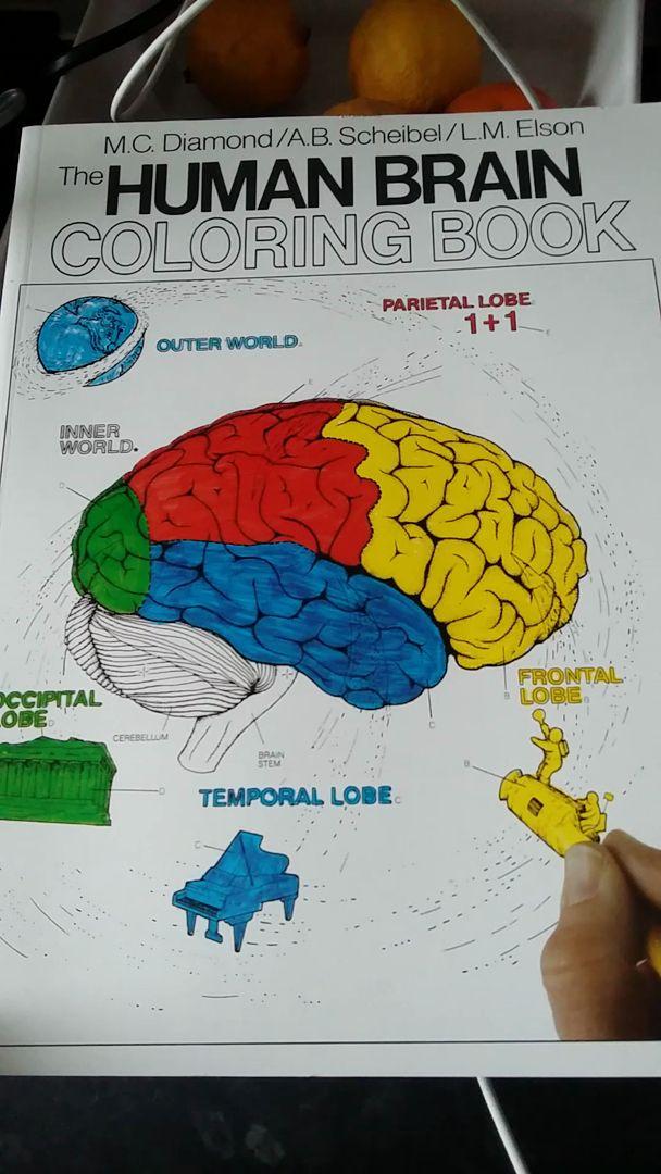 The Human Brain Coloring Book Elegant The Human Brain Coloring Book Coloring Concepts Series Coloring Books Anatomy Coloring Book Kids Coloring Books