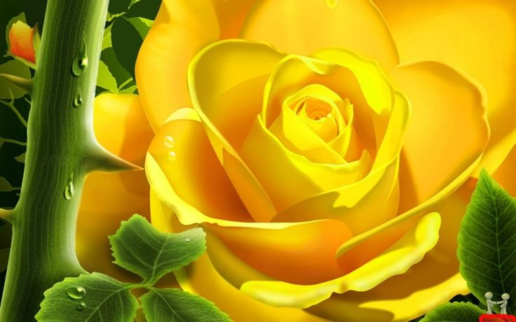 Superb Yellow Rose Beautiful Wallpaper | Download Hd Flower Wallpaper wallpaper and image with High Quality