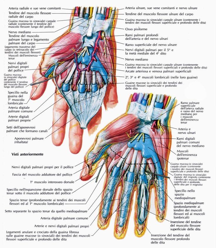 Homedesignideas Eu: Anatomia De La Mano.