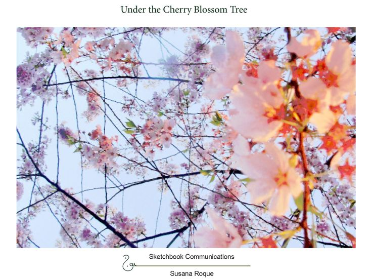 This series of photographs is called Under a Cherry Blossom Tree. It can be downloaded in full at : http://www.sketchbookcommunications.com/preview&id=36  thank you  Susana Roque http://www.susanaroque.com/blog.php