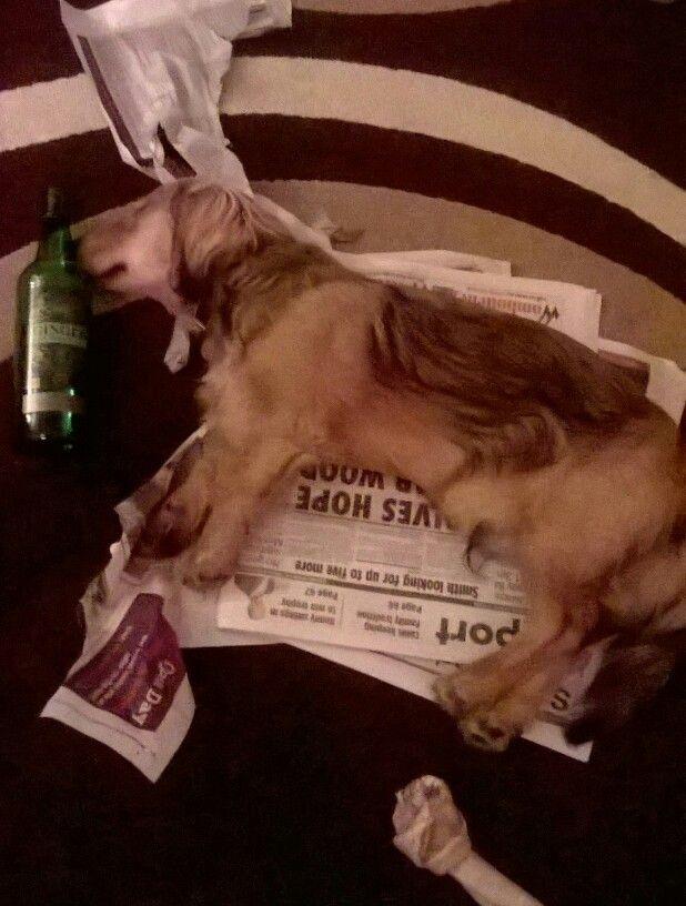 Hard night#dachshound
