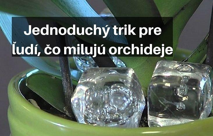 Do kvetináča s orchideami vložila kocky ľadu, keď zistíte prečo, urobíte to tiež | Chillin.sk