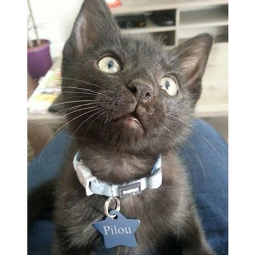 112 best les chats top cat model images on pinterest blouse crop shirt and economic model. Black Bedroom Furniture Sets. Home Design Ideas