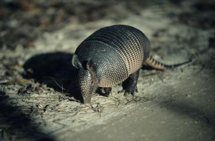 How to Make an Armadillo Trap Out of Wood | Cuteness.com