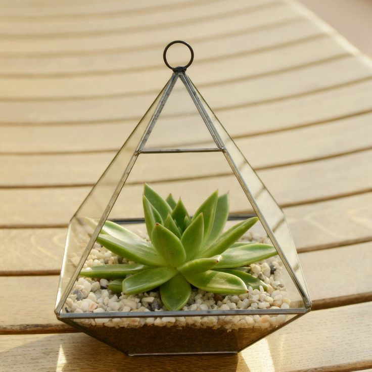 Geometric glass vase succulent terrarium vase en verre vase et plantes grasses - Kit terrarium plante ...