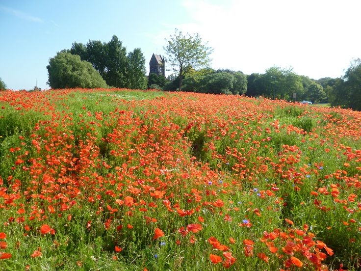 Poppies bloom in Knowsley to commemorate 100th anniversary of WW1   Flickr - Photo Sharing!