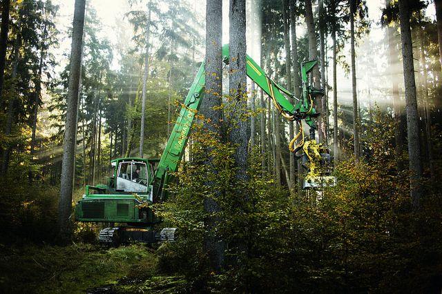 Sanfter Riese - Baumhalter zum Schutze der Verjüngung #BaySF #Forst #Holz #Waldarbeiter #Forstwirt #Harvester #Forstwirtschaft #Holzernte #Staatsforsten #Forstbetrieb #Sturm #Motorsäge #Bayern