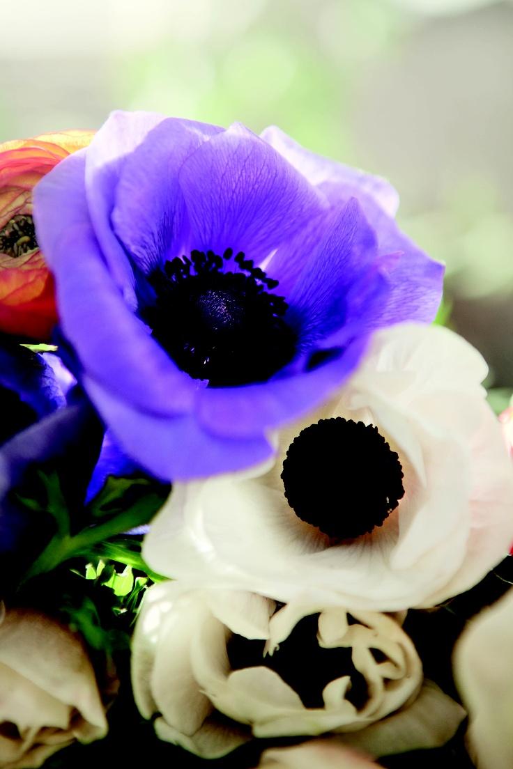 På Alla hjärtans dag blir man gladast för en fin blomma!