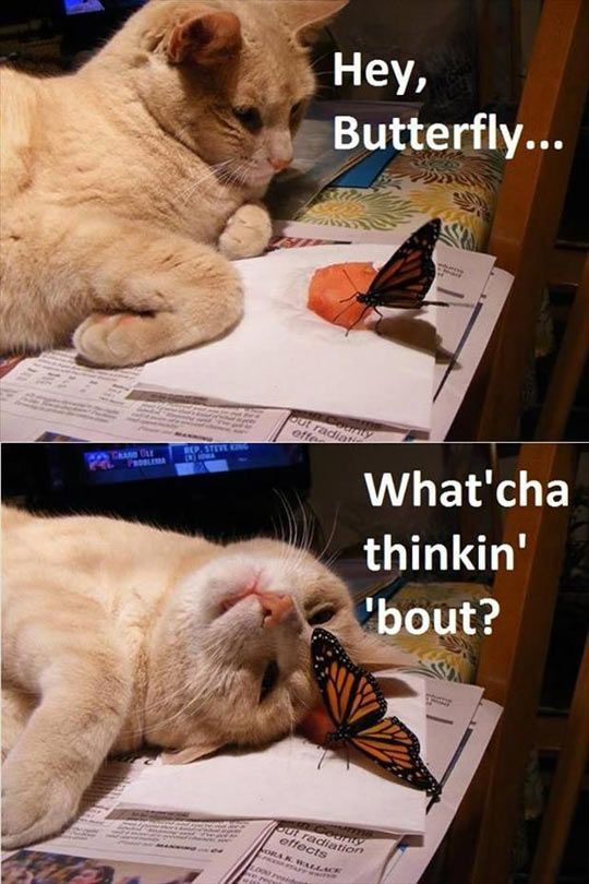 I don't like cats... And I'm terrified of butterflies...but this is so funny<--> ok so i just pinned this with it saying this. I just wanted to say that i love this cuz its cute and butterflies are NOT terrifying and seriously, you hate cats? If your alergic to either one it makes sense but if not then... Seriously?