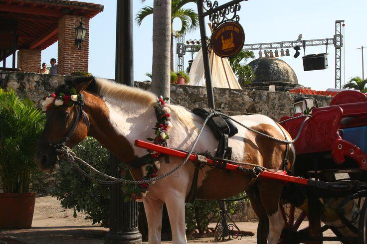 horse carriage wedding car decoration cartagena